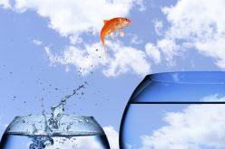 WALL UP : dopez la croissance de votre entreprise !
